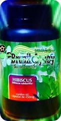 HIBISCUSL